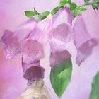 Fancy Foxglove by enchantedImages