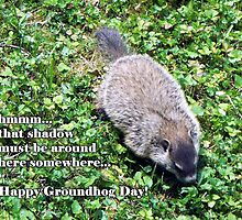 Groundhog Day - Where's the shadow? by WalnutHill