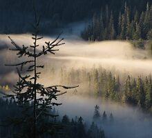 Morning Layer by Corey Bigler