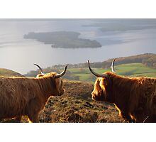 Enjoying the View - Highland Cattle Photographic Print