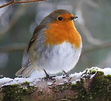 The Lake District: The Windermere Robin by Rob Parsons