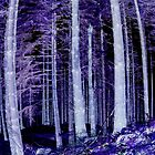 Inverted Dunkeld Woodland by Ian Porter