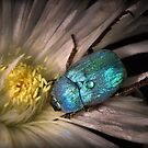 Beetle jewel by jimmy hoffman