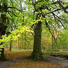 Autumn Trees, Holme Wood, Loweswater, Cumbria by RuthMoore