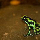 Green Dart! by vasu