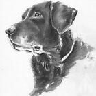 Labrador by Ally Tate