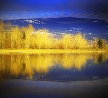 Reflections in Gold by Tara  Turner