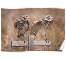 """Put Your Right Foot Out"" - burrowing owls Poster"