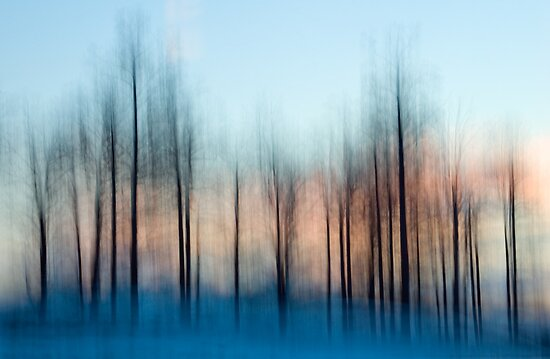 Winter Trees at Dawn by Oscar Gutierrez