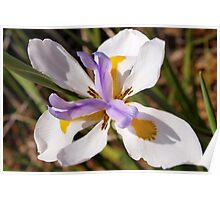 Diagonal iris Poster