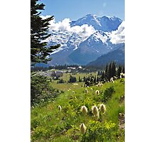 Mt. Rainier Anemones in the Sun Photographic Print