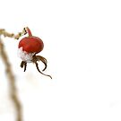 Rose Hip by Aase