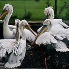 Five Pelicans by AnnDixon