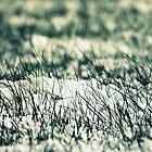 Snow Grass - Winter Hits by Erin Mason