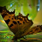 More Macro by Julie-anne Cooke Photography