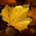 Last of the Leaves by brimo