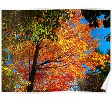 Fluttering colours of Fall Poster