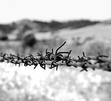 Barbed Wire by Kristi Robertson