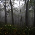 Misty... by jaegemt1