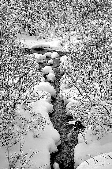 Snowy Stream by Joseph T. Meirose IV
