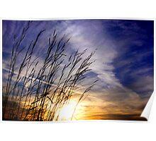 Evening Blades Poster