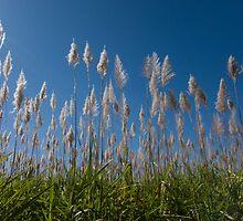 Sugar Cane blues by PhotAsia