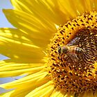Busy Bee by Doty