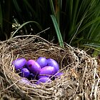 Dianella Eggs by stevenwells