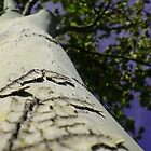 Tree by melymiranda