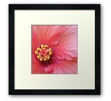 Pink Hibiscus #2 Framed Print