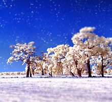 Winter Wonderland  by Pene Stevens