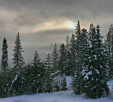 Winter Scene by Barbara  Brown