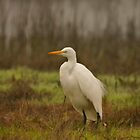 Egret in the Wetlands by Xcarguy