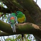 Red Rumped Parrots! by Gabrielle  Lees