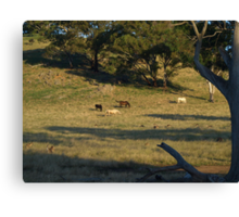 Late Afternoon On The Farm. Canvas Print