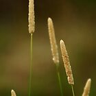 Summer Grasses by Joe Mortelliti