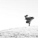 Lone - square by Pirostitch