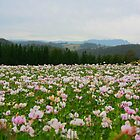 Poppy Field by harshcancerian