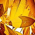 Autumn in monochrome...Got 2 Featured Works by Kornrawiee