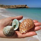 Ocean Gifts - Maggies Beach, Warroora Station WA Australia by cookieshotz