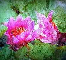 Water Lilies by saseoche