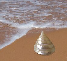 Pearly Trochus Shell by the Shore by ShellsbyShore