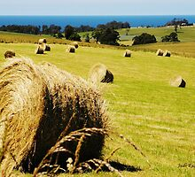 Making Hay while the Sun shines by Judi Rustage