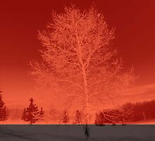 Winter tree by Marlies Odehnal