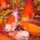 goldfish by ANNABEL   S. ALENTON