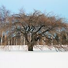 Tree In Snow by SuddenJim