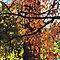 Autumn Color by Jean Gregory  Evans