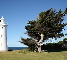Lighthouse Wind Swept Tree - The Bluff, Devonport, Tasmania by RainbowWomanTas
