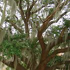 From The Land Of Spanish Moss by Wanda Raines
