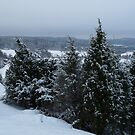 Bushes in Snow with a Darkened View by HELUA